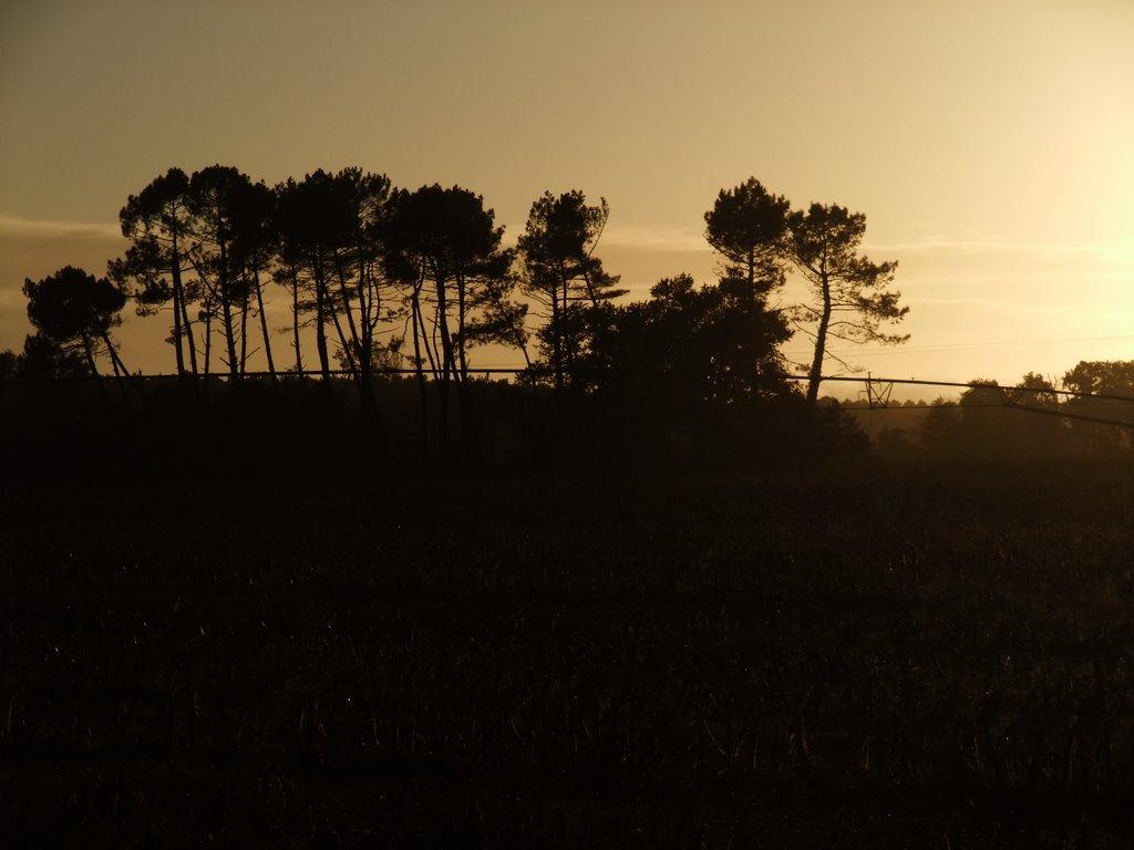 Azur forest