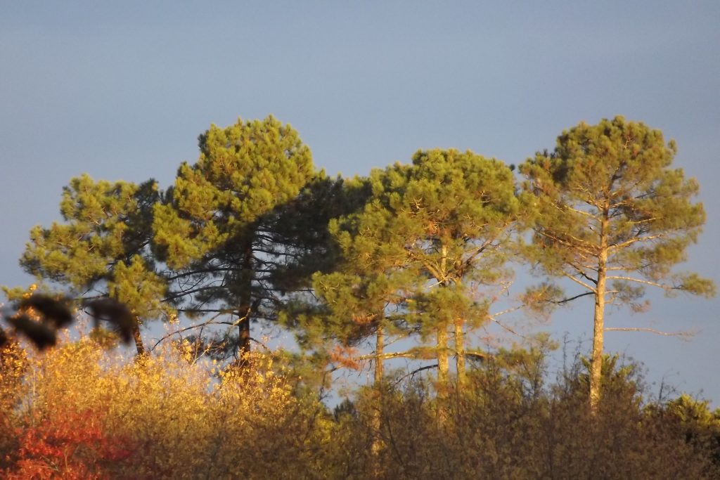 Winter in Les Landes